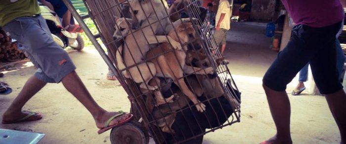 dog-meat-festival-960x400-700x292.jpg